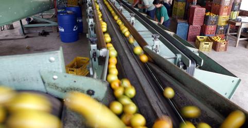 Exportação de suco de laranja do Brasil avança 24% entre julho e outubro, diz CitrusBR