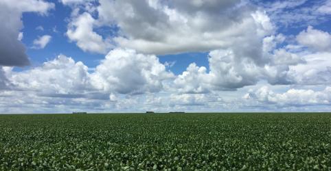 Conab eleva previsão de exportação de milho 18/19; vê safra recorde de soja em 19/20