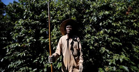 Placeholder - loading - INVESTIGAÇÃO-Colhido por escravos: café alimenta crise no Brasil