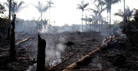 Desmatamento da Amazônia em novembro sobe mais de 100% na comparação anual, diz Inpe