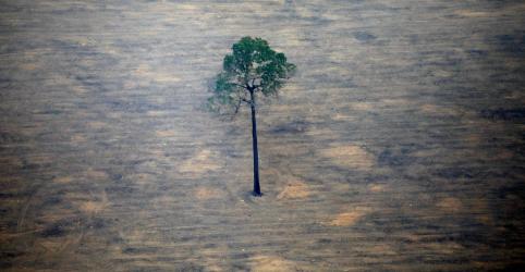 Placeholder - loading - Brasil e China lançam satélite para monitorar Amazônia