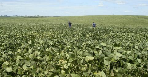 Placeholder - loading - À exceção do RS, chuva deve trazer alívio à safra de soja; colheita ainda é tímida