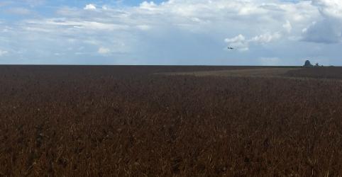 Placeholder - loading - Imagem da notícia Safra de soja do Brasil encolhe com seca; setor vê 'catástrofe' se chuva não voltar