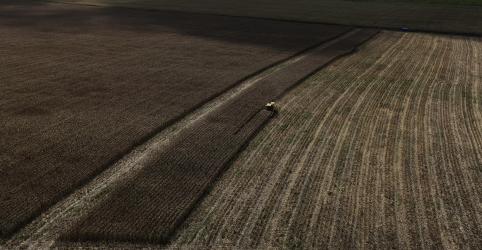 Placeholder - loading - Imagem da notícia Safra de trigo do Brasil pode ter salto neste ano, diz FCStone