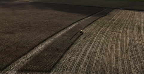 Placeholder - loading - Safra de trigo do Brasil pode ter salto neste ano, diz FCStone