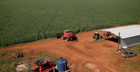 Placeholder - loading - Imagem da notícia Chuva garante 'espetáculo', e safrinha de milho do Brasil deve crescer 23%, aponta pesquisa