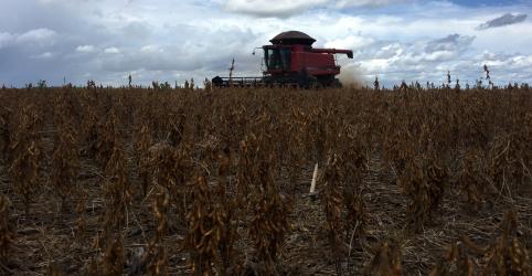 Agroconsult eleva previsão de safra de soja 2018/19 do Brasil a 118 mi t
