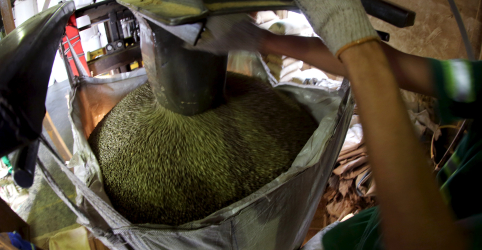 Placeholder - loading - Imagem da notícia Exportadora de café Terra Forte entra com pedido de recuperação judicial