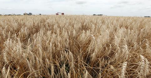 Placeholder - loading - EUA esperam abocanhar 80% da cota livre de tarifa para trigo do Brasil