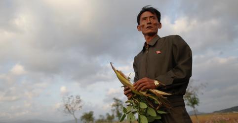 Placeholder - loading - Coreia do Norte reduz porções alimentares após colheita ruim, diz ONU