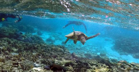 Placeholder - loading - Imagem da notícia Crescimento econômico e mudança climática ameaçam 1 milhão de espécies, alertam cientistas