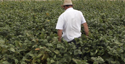 Placeholder - loading - Imagem da notícia Recuperação judicial de produtor rural em Mato Grosso cria conflitos com tradings