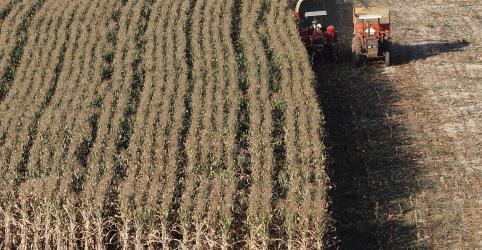 Placeholder - loading - Imagem da notícia Safra de milho do Brasil aproxima-se de recorde; colheita de soja também cresce