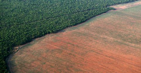 Placeholder - loading - Imagem da notícia Desmatamento acelera em 5 meses de governo Bolsonaro e atinge maior velocidade em uma década