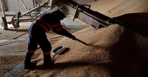 Placeholder - loading - Imagem da notícia AgriBrasil vende milho para México; mercado foca qualidade em MT para exportações
