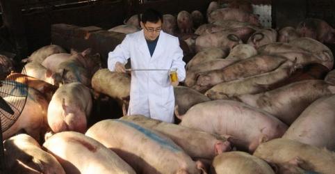 Mortes de animais com gripe suína na China podem ser o dobro do número oficial