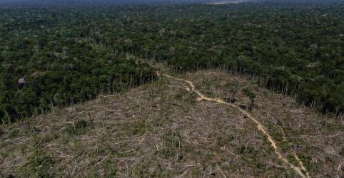 Placeholder - loading - Desmatamento da Amazônia cresce mais de 88% em junho