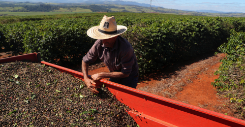 Placeholder - loading - Agricultores brasileiros vendem grande volume de café antes de geadas