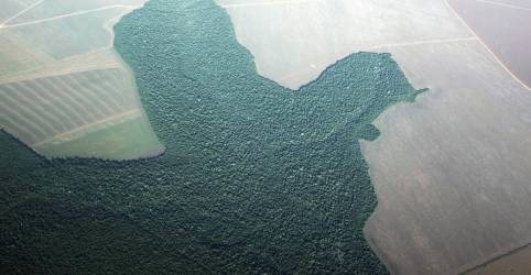 Desmatamento no Brasil dispara em julho e ameaça acordo comercial com UE