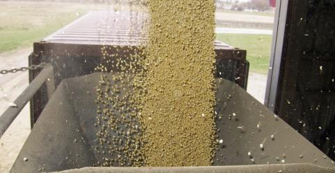 EXCLUSIVO-Teor de proteína de soja no Brasil cai, coloca vendas à China em risco