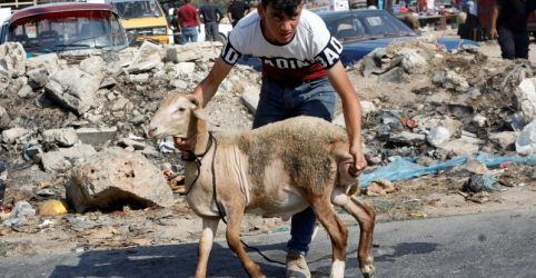 Placeholder - loading - Imagem da notícia Bloqueio de Israel impede moradores de Gaza de comprar cordeiro para sacrifício religioso