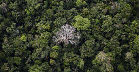 Placeholder - loading - Bolsonaro ataca Alemanha e Noruega por suspensão de recursos para ações ambientais