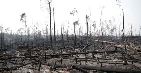 Placeholder - loading - Ministério da Justiça autoriza uso de Força Nacional de Segurança para combater desmatamento no Pará e Rondônia
