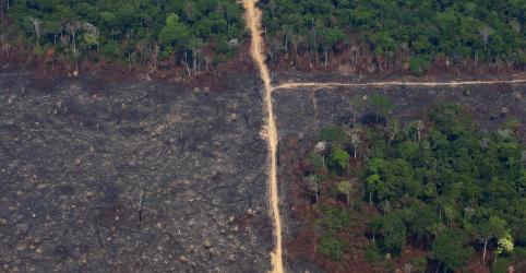 Placeholder - loading - Mundo não está cumprindo meta de reduzir desmatamento até 2020, diz estudo