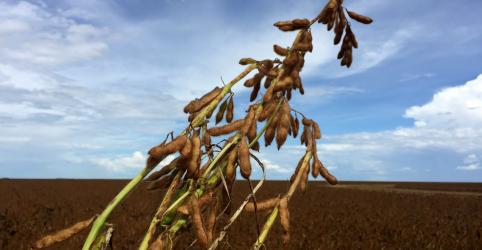 Placeholder - loading - Imagem da notícia Safra de soja do Brasil 19/20 deve crescer 6,6% com aposta em clima melhor, aponta pesquisa
