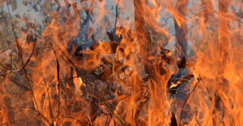 Enquanto o mundo olha para Amazônia, Cerrado e Pantanal também queimam