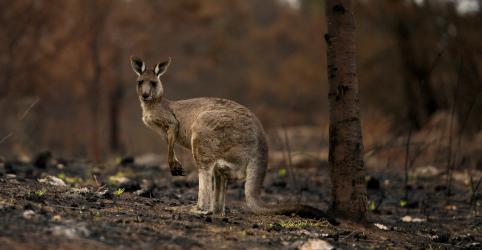 Austrália ordena nova retirada em massa por aumento de incêndios florestais