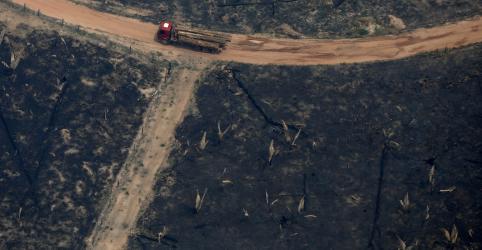 Placeholder - loading - Desmatamento começa mais cedo na Amazônia e dobra em janeiro na comparação anual