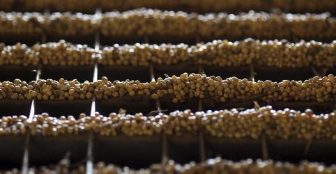Abiove vê safra e moagem recordes de soja no Brasil; reduz exportações