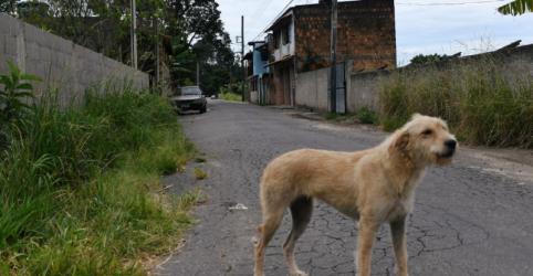 Placeholder - loading - Morte por coronavírus em Miguel Pereira ressalta riscos e provoca debates
