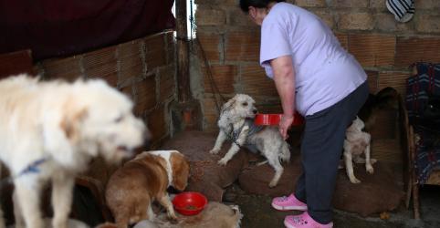 Ativistas socorrem animais abandonados durante avanço do coronavírus na América Latina