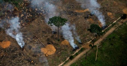 Placeholder - loading - Após grande devastação em 2019, florestas tropicais veem nova ameaça no coronavírus