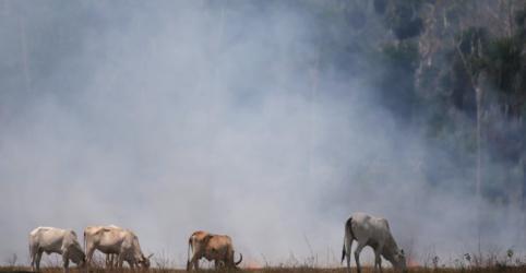 Placeholder - loading - Imagem da notícia Frigoríficos brasileiros compraram gado ligado ao desmatamento, diz Greenpeace