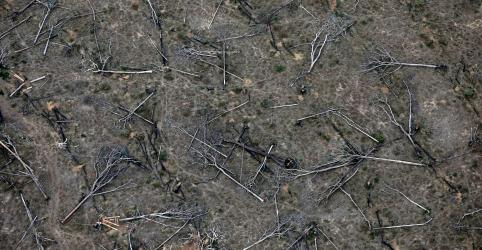 Placeholder - loading - Desmatamento da Amazônia aumenta 34,4% em 2019 e é o maior desde 2008, diz Inpe
