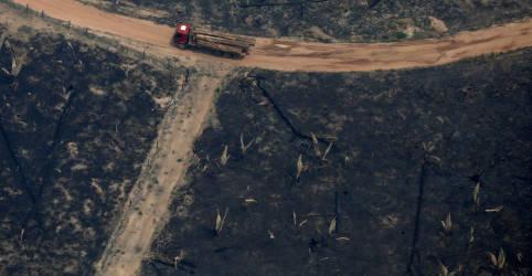 Placeholder - loading - Imagem da notícia Em carta a governo, empresários cobram combate a desmatamento