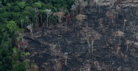 Placeholder - loading - Imagem da notícia Desmatamento na Amazônia cresce pelo 14º mês e se encaminha para pior registro em uma década