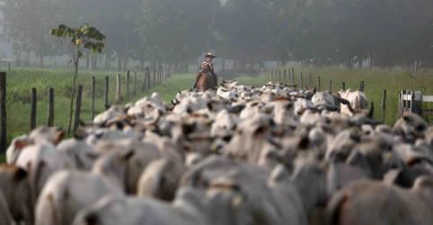 Placeholder - loading - ESPECIAL-Um produtor tentou, em vão, fazer pecuária na Amazônia mais sustentável