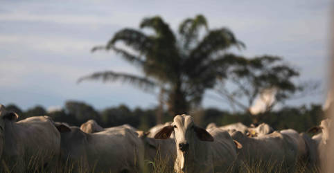 Placeholder - loading - Imagem da notícia ENFOQUE-Do arroz ao boi, commodities agrícolas do Brasil têm preços recordes
