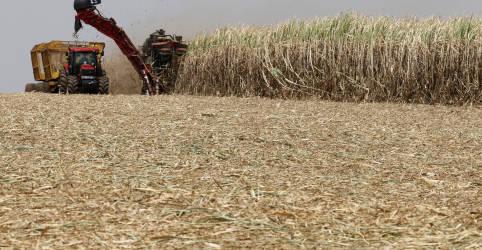 Placeholder - loading - Imagem da notícia Brasil deve estender por 3 meses cota de etanol isenta de taxa, dizem fontes
