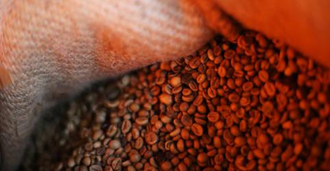 Placeholder - loading - Exportação de café verde do Brasil cai 2,2% em agosto, diz Cecafé