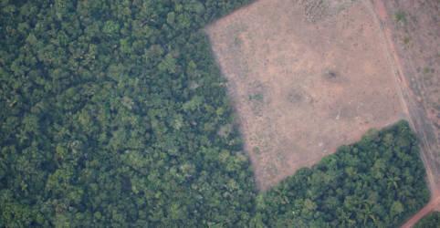 Placeholder - loading - Imagem da notícia Desmatamento diminui na Amazônia brasileira em agosto, mas continua alto