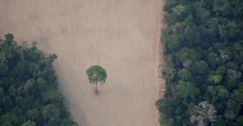 Placeholder - loading - Imagem da notícia Países europeus fazem apelo para que Brasil tome medidas contra desmatamento da Amazônia