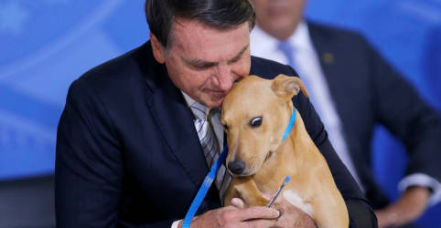 Placeholder - loading - Imagem da notícia Bolsonaro sanciona projeto que eleva penas para maus-tratos a animais