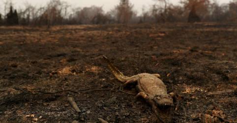 Placeholder - loading - Pantanal fecha setembro com pior índice de queimadas desde 1998