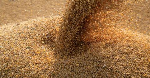 Placeholder - loading - Imagem da notícia Conab vê nova safra recorde de soja e exportação de 85 mi t do Brasil em 2021