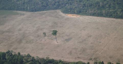 Placeholder - loading - Desmatamento da Amazônia cai pelo 3º mês seguido, mas mantém patamar elevado